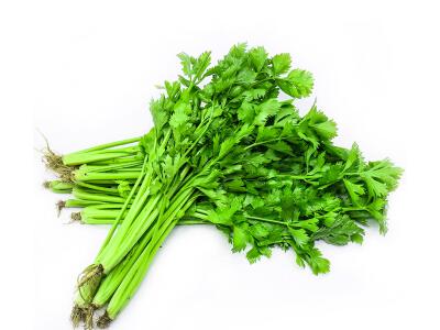 有机芹菜 新鲜蔬菜 约500g