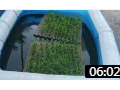 大棚蔬菜种植技术 (15播放)