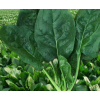 夏王菠菜种子菠菜种籽耐热老品种圆叶菠菜种孑四季夏秋冬高产进口