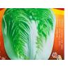 改良青杂三号大白菜种子菜园农家秋季播蔬菜籽辣白菜泡菜韩国种孑