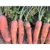 胡萝卜10斤 新鲜蔬菜水果 脆甜红心萝卜批一箱现挖发货 包邮整箱