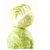 【旭耕】有机卷心菜500g包菜甘蓝新鲜蔬菜洋白菜自种圆白菜卷芯菜