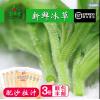 好新鲜蔬菜新鲜冰草冰菜非洲冰菜新鲜沙拉蔬菜生菜三份